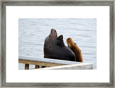 Supersized Sea Lion And Friend Framed Print