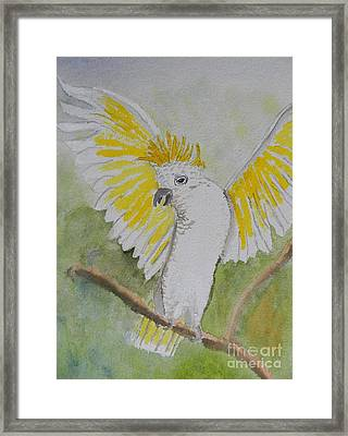 Suphar Crested Cockatoo Framed Print by Pamela  Meredith