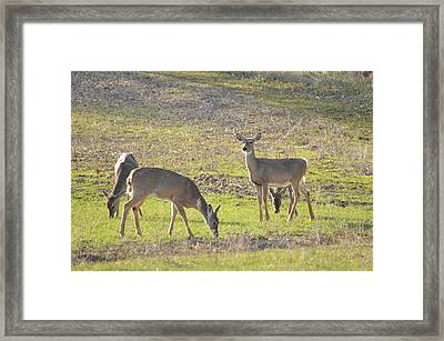 Supper Gathering Framed Print