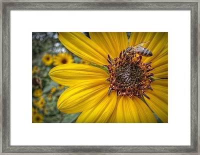 Supper Time Framed Print by Linda Unger