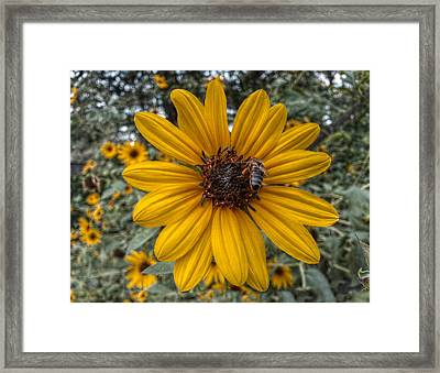 Suppers' Ready Framed Print by Linda Unger