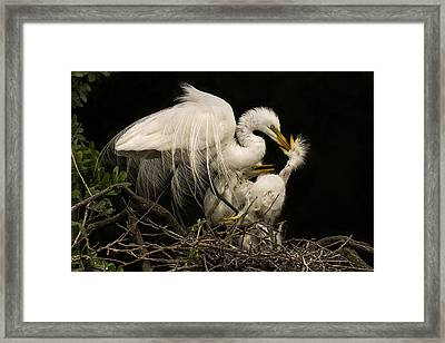 Suppertime Framed Print by Priscilla Burgers