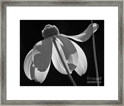 Support Framed Print by Inge Riis McDonald
