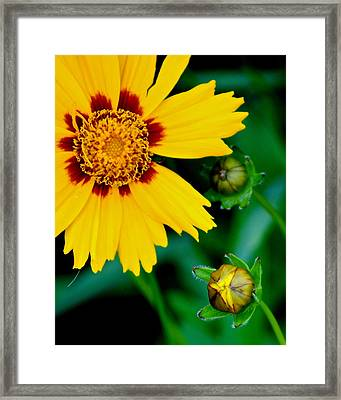 Supreme Beauty Framed Print by Frozen in Time Fine Art Photography