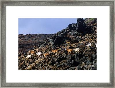 Sure Footed Framed Print