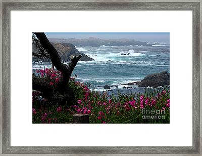 Surf And Turf Framed Print by Patrick Witz
