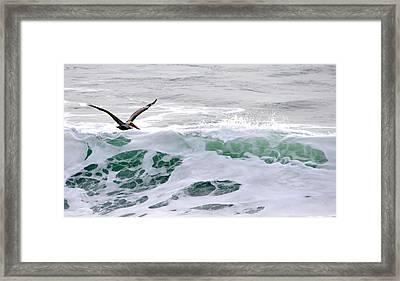 Framed Print featuring the photograph Surf N Pelican by AJ  Schibig