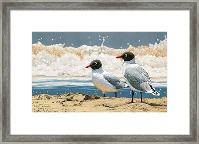 Surf 'n' Turf - Franklin's Gulls Framed Print