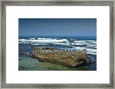 Surf Waves At La Jolla California With Gulls Perched On A Large Rock No. 0194 Framed Print by Randall Nyhof