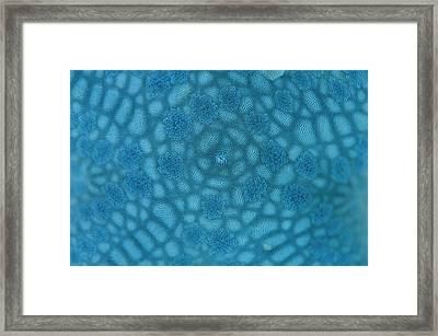 Surface Of Blue Starfish Framed Print