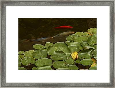 Framed Print featuring the photograph Surface Tension by Michael Gordon