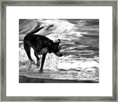 Surfer Bird Framed Print