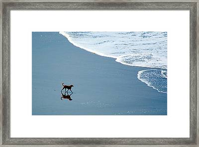 Surfer Dog Framed Print by AJ  Schibig