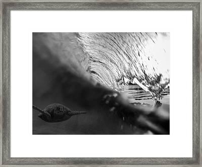 Surfing Honu Framed Print by Brad Scott