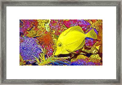 Surgeon Fish Yellow Tang Digital Art Framed Print