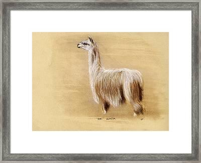 Suri Alpaca Framed Print by Sara Cuthbert