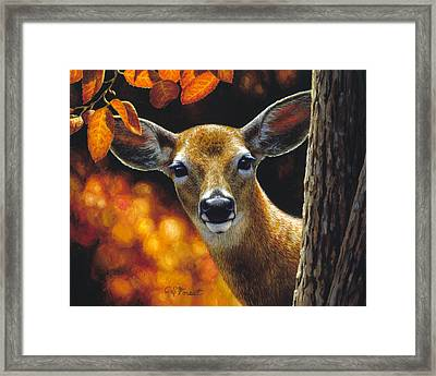 Whitetail Deer - Surprise Framed Print by Crista Forest