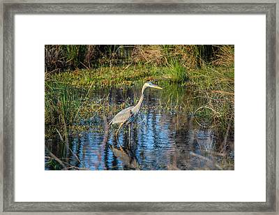 Surprise On The Trail Framed Print