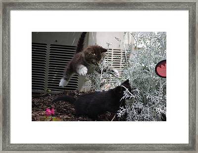 Surprise Framed Print by Tannis  Baldwin