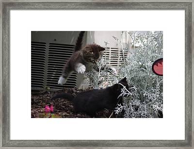 Surprise Framed Print