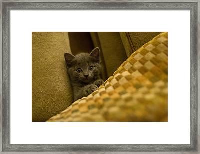 Surprised Kitten Framed Print by Matt Radcliffe