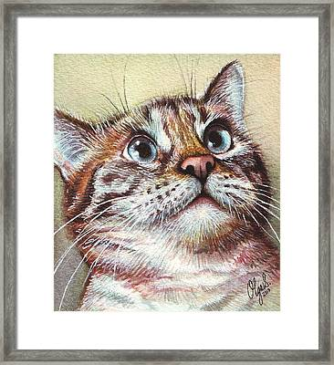 Surprised Kitty Framed Print by Olga Shvartsur