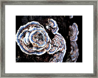 Surprising II Framed Print