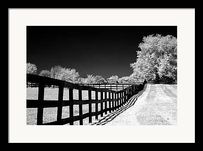 Black And White Surreal Fantasy Trees And Landscape Framed Prints