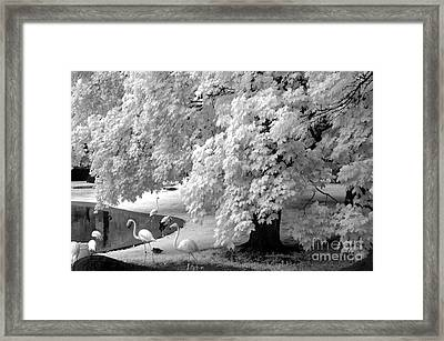 Surreal Black White Infrared Flamingo Nature Scene Framed Print by Kathy Fornal