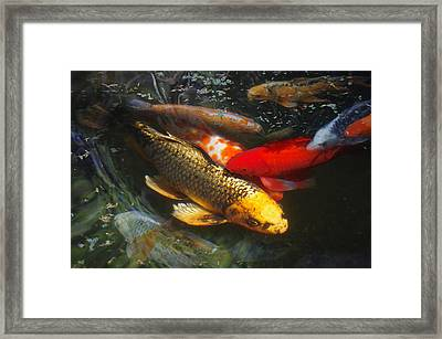 Surreal Fishpond Framed Print