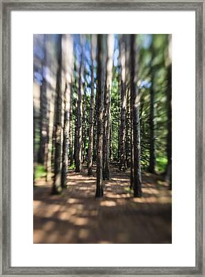 Surreal Forest Framed Print