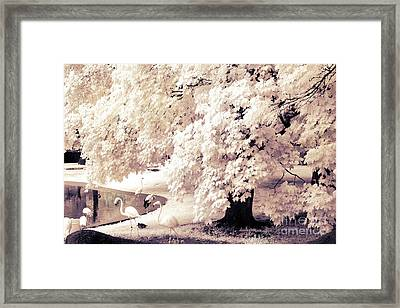 Surreal Infrared Ethereal Nature With White Flamingos - Infrared Trees And Flamingos  Framed Print by Kathy Fornal