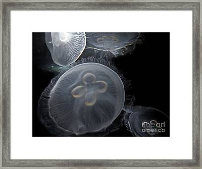 Surreal Jelly Fish  Framed Print by Valerie Garner