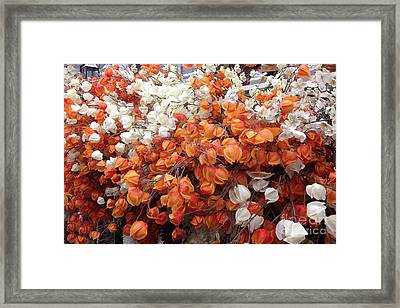 Surreal Orange And White Fall Leaves Branches And  Flowers - Colors Of Autumn Fall Leaves  Framed Print by Kathy Fornal