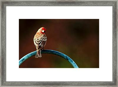 Surreal Purple Finch Framed Print