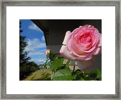 Surreal Rose Framed Print