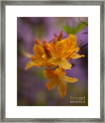 Surrealistic Blooms Framed Print by Mike Reid