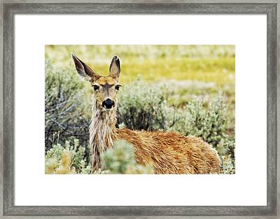 Surround Sound Framed Print