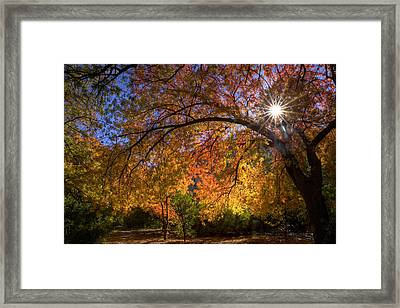 Surrounded By Autumn's Color Framed Print