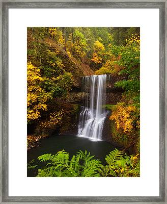 Surrounded By Fall Framed Print by Darren  White