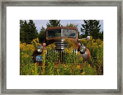 Surrounded By Gold Framed Print by Sandra Updyke