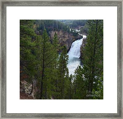 Surrounded By Pine Trees Framed Print