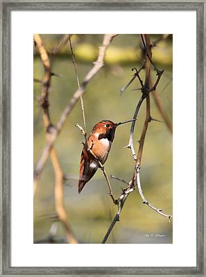 Framed Print featuring the photograph Surrounded By Thorns by Amy Gallagher