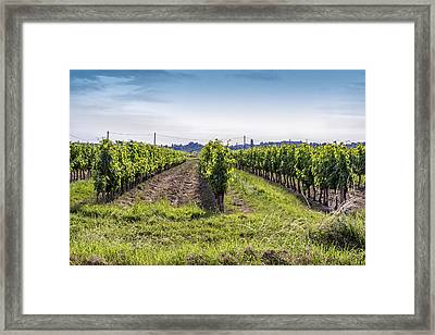 Surrounded By Vineyards Framed Print by Georgia Fowler