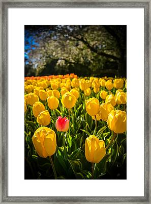 Surrounded Framed Print by Kristopher Schoenleber