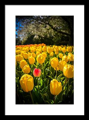 Longwood Gardens Photographs Framed Prints