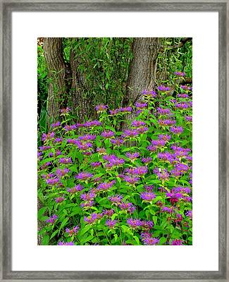Surrounded Framed Print by Rodney Lee Williams
