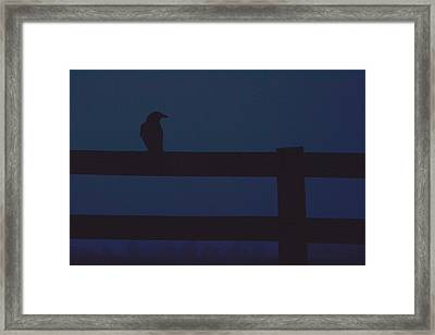 Surveying Framed Print