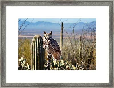 Surveying The Sonoran Framed Print