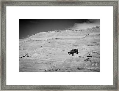 Survival Framed Print by Cheryl McClure